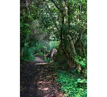 Forest Ponies Photographic Print
