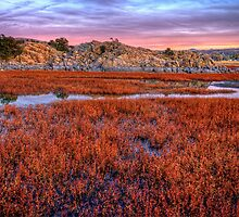 Sea of Red by Bob Larson