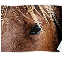 Eye of the Equine Poster