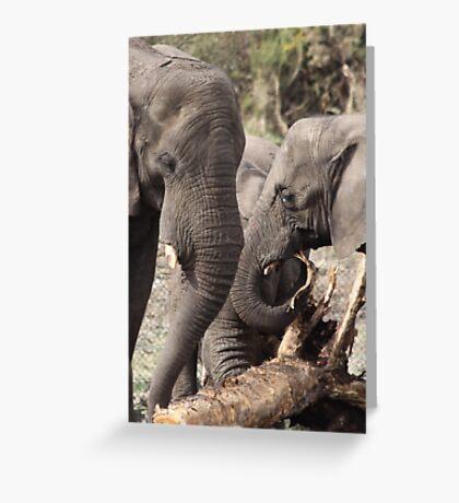elephants 2 Greeting Card