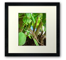 Garden Gecko - Wildlife in Florida Framed Print