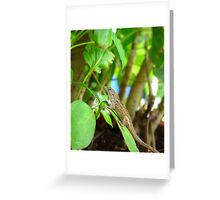 Garden Gecko - Wildlife in Florida Greeting Card