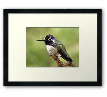 Costa's Hummingbird ~ Male II Framed Print