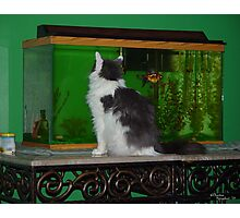 Cat and Fish Photographic Print