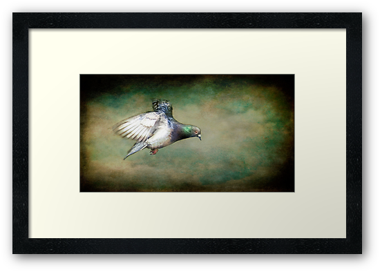 Stop That Pigeon. by Sue Smith