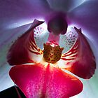Orchid Close Up by Marc Garrido Clotet