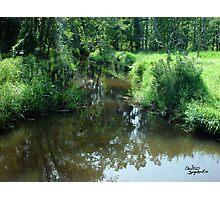 Lush Green Creek - Creeks in New Jersey Photographic Print