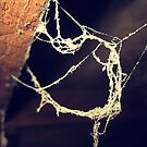 Cobwebs by John Laubach