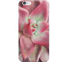 Pink Echeveria iPhone Case/Skin