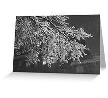 Bending Boughs Greeting Card