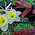 Bouquet by teresam