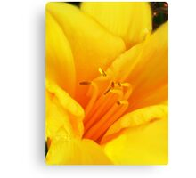 Sweetest Bloom IIII Canvas Print