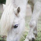 Princess Possum - The Pony by Good-Thanks