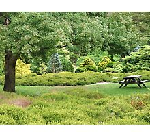 Conifers (5651) Photographic Print