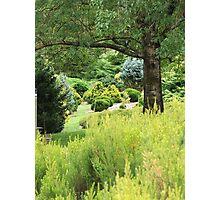 Conifers (5654) Photographic Print
