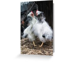 Chook House Brawl Greeting Card