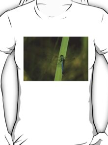 Pond Jewel - Blue and Green Dragonfly T-Shirt