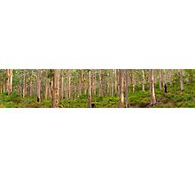 The Perfect Forest Photographic Print