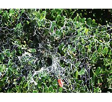 What A Web We Weave Photographic Print