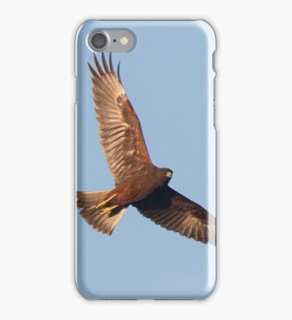 Hunting Harrier iPhone Case/Skin