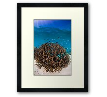 Busy Reef Framed Print