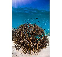 Busy Reef Photographic Print