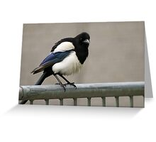 Watchful Magpie Greeting Card