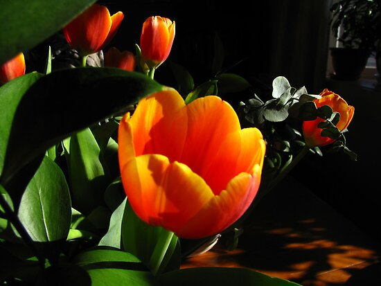 For the love of Tulips by maxy