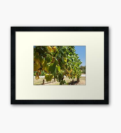 Coldstream Hills Framed Print