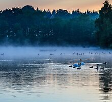 Misty Morning On The Lake 3 by colinstock