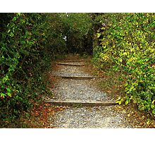 Forest Steps Photographic Print