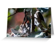 Update Hummingbird Babes  Greeting Card