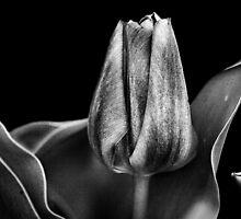 A Dark Spring. by Todd Rollins