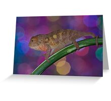 Disco cham Greeting Card