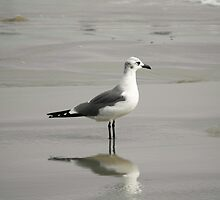 Seagull And Reflection by POETRY508