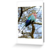 Lilac Breasted Roller On A Chilly Morning Greeting Card