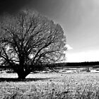 the lone tree  by stampmouse