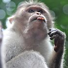 Monkey Bubbles by ApeArt