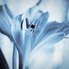 Alstroemeria Oil Paint by Stas Medvedev