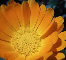 Summer Flowers - Pendine Sands by Browneyedgirl78