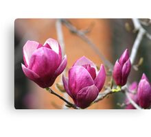 Blooms & Buds! Canvas Print