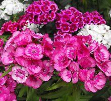 Beauty  In Abundance by Tracy Faught
