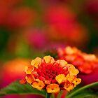 flower by fotosky