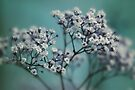 whispers of spring by Ingrid Beddoes