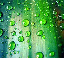 Sparkle. by Carolyn Walesa