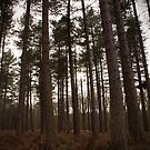Sherwood Forest by Mike Topley