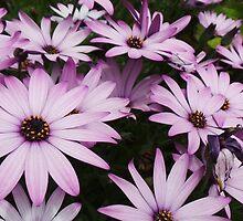 St. Michael's Mount Garden Flowers II by TigerOPC