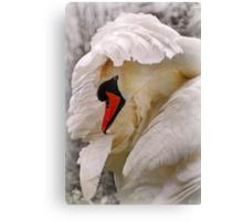 am i a swan yet? Canvas Print