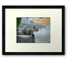 Curiosity - Indian Squirrel Framed Print