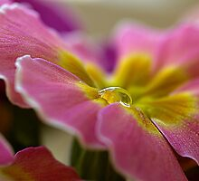 Pink&Yellow( sorry,  a better title, I can not imagine today) by Hetty Mellink